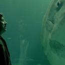 The Sunfish - Søren Balle - Denmark